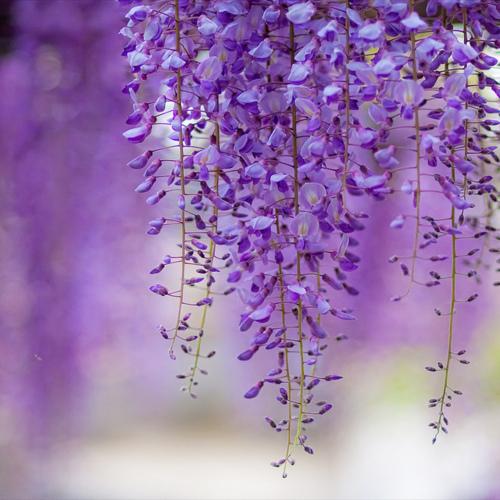 FLOWER-flowers-33623902-500-500